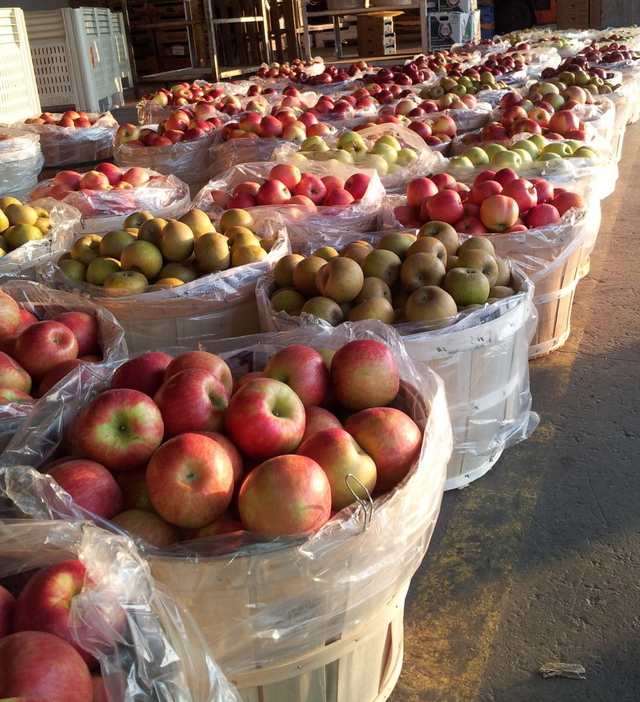 Fresh local apples picture by: Mairlyn Smith